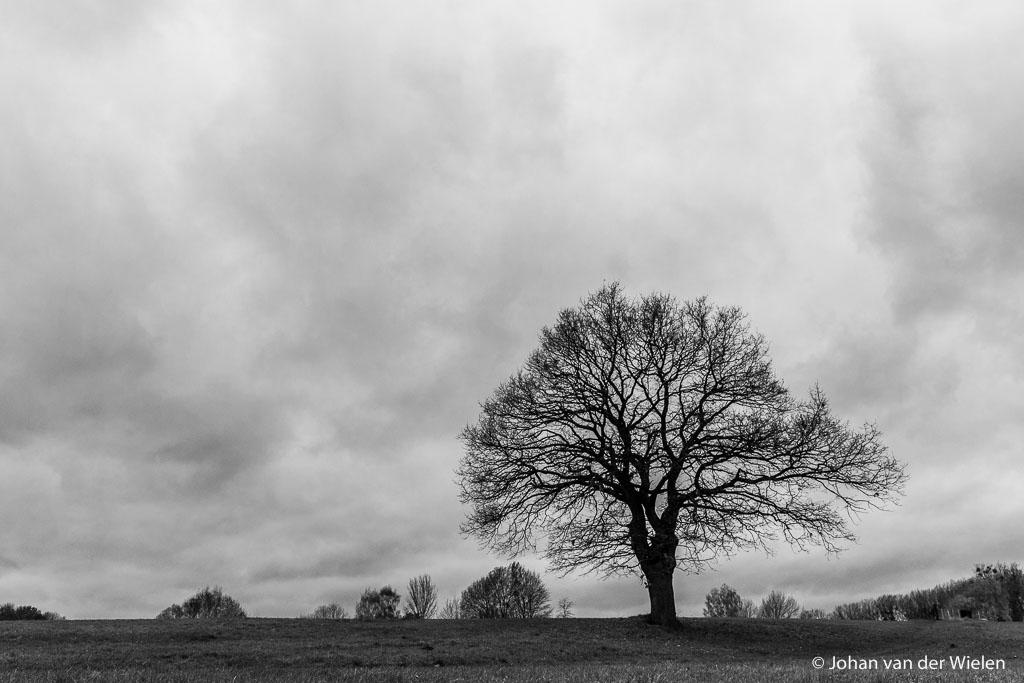 Symbolisch laatste beeld, de eenzame boom zonder blad wacht onder de samenpakkende wolken op wat komen gaat. Zo voel ik mij ook. Ik hoop dat ik net als deze eik weerstand kan bieden en er straks nog steeds sta als het weer lente wordt! zondagmiddag 13:31