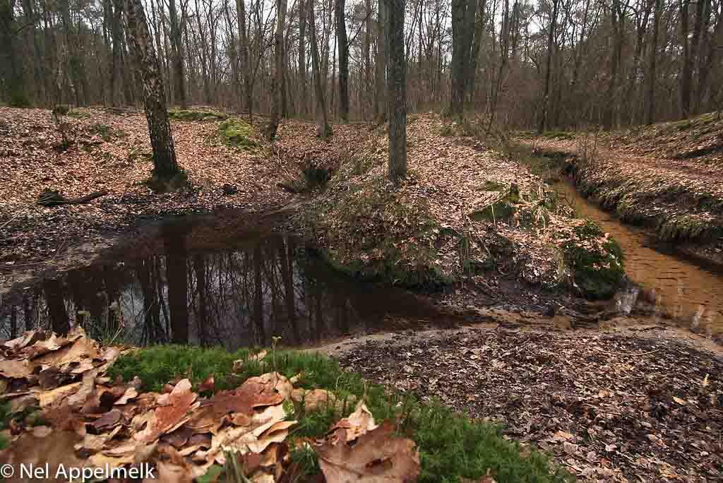 Gebieden fotograferen Natuurfotografie.nl:Koppelsprengen, Ugchelen