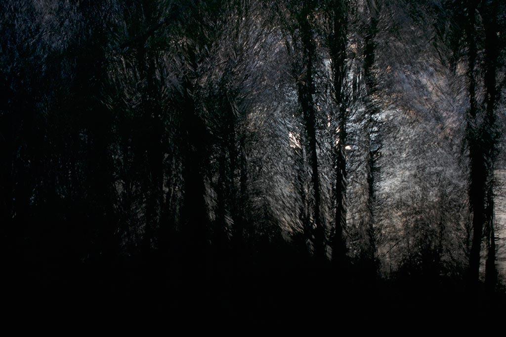 Licht door bomen