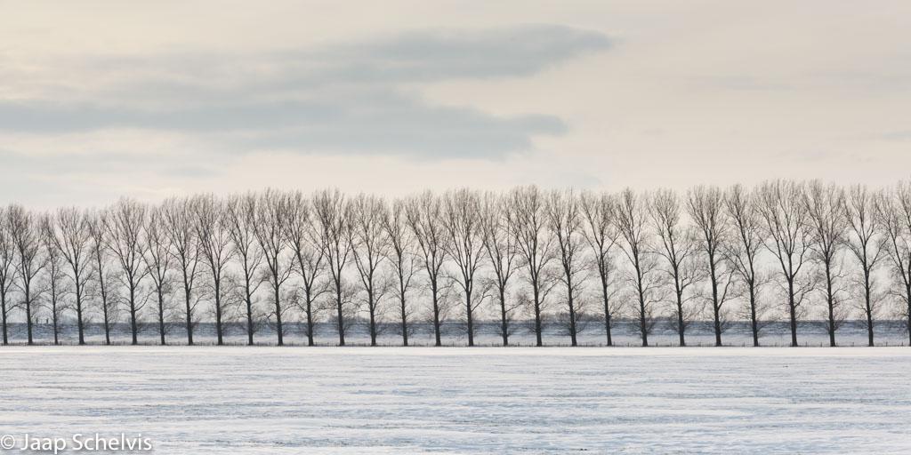 Situaties waarin zwart en wit overheersen, zoals bij deze kale bomen in de sneeuw bieden de mogelijkheid om de lijnen en de regelmaat in je beeld extra te benadrukken.