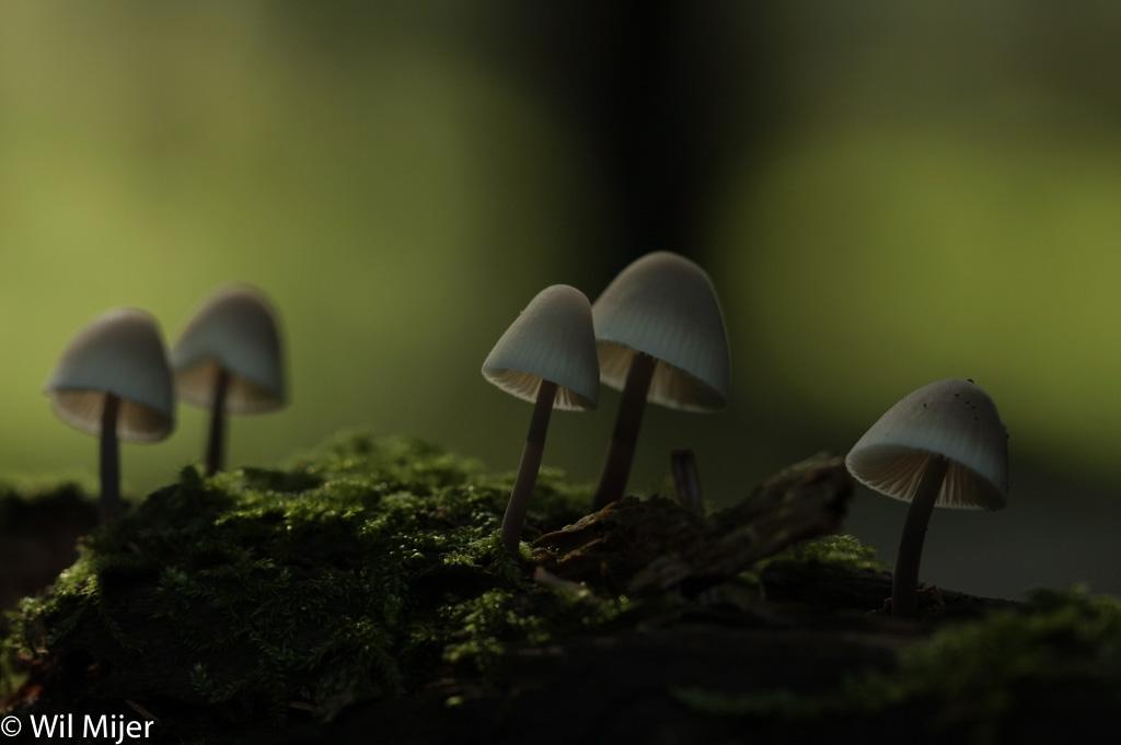 De oorspronkelijke opname van de paddenstoelen