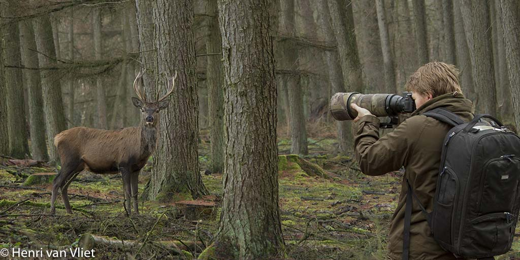 Voor het fotograferen van wild levert het struinen trouwens zelden mooie foto's op. Heupvurend door de bossen rennen jaagt het wild voor je uit, je zal hooguit wat hertenkonten kunnen kieken. Beter is het toch vanaf de paden te fotograferen. Je maakt dan doorgaans veel minder geluid tijdens het lopen waardoor je kansen toenemen.