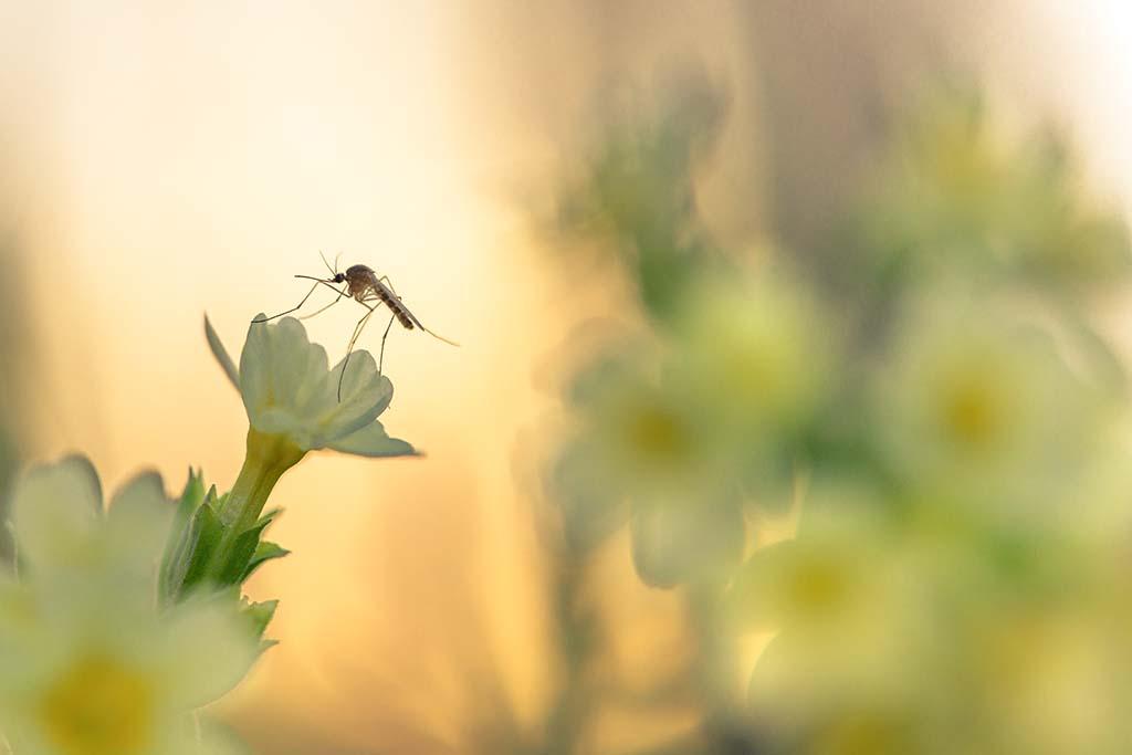 Winnaar insecten en kriebelbeesten.