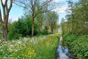 Het Loetbos in het voorjaar