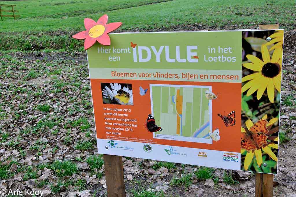 De bloemen van de Idylle zijn ingezaaid in de nazomer van 2015