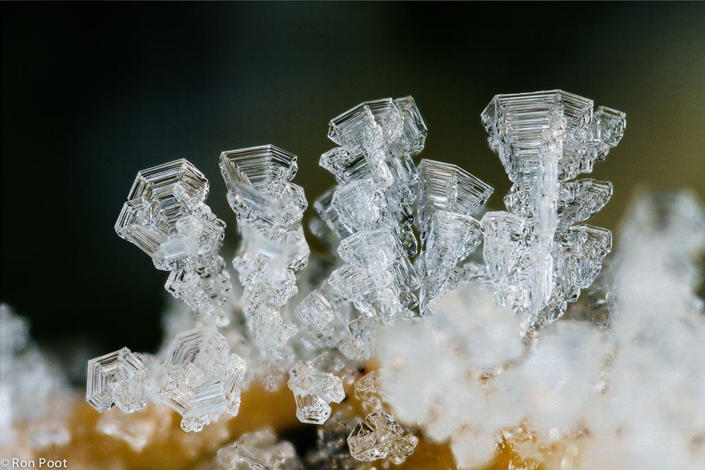 Rijp vormt ijskristallen op een struik in de tuin. Met macrolens en tussenringen.