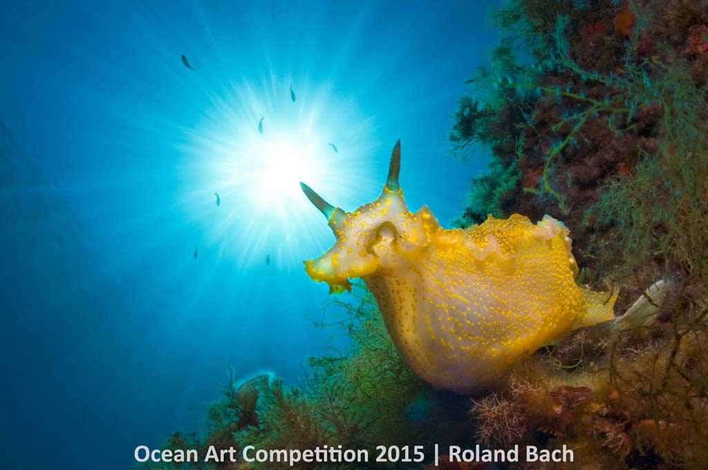 Winnaar categorie Nudibranchs.