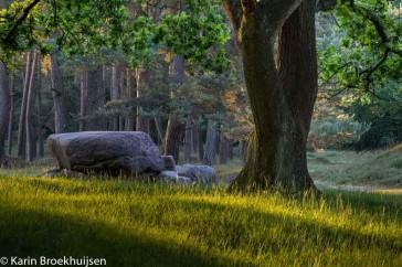 Een van de vele hunebedden die Drenthe rijk is, dit hunebed bevind zich in het Drentse Aa gebied.
