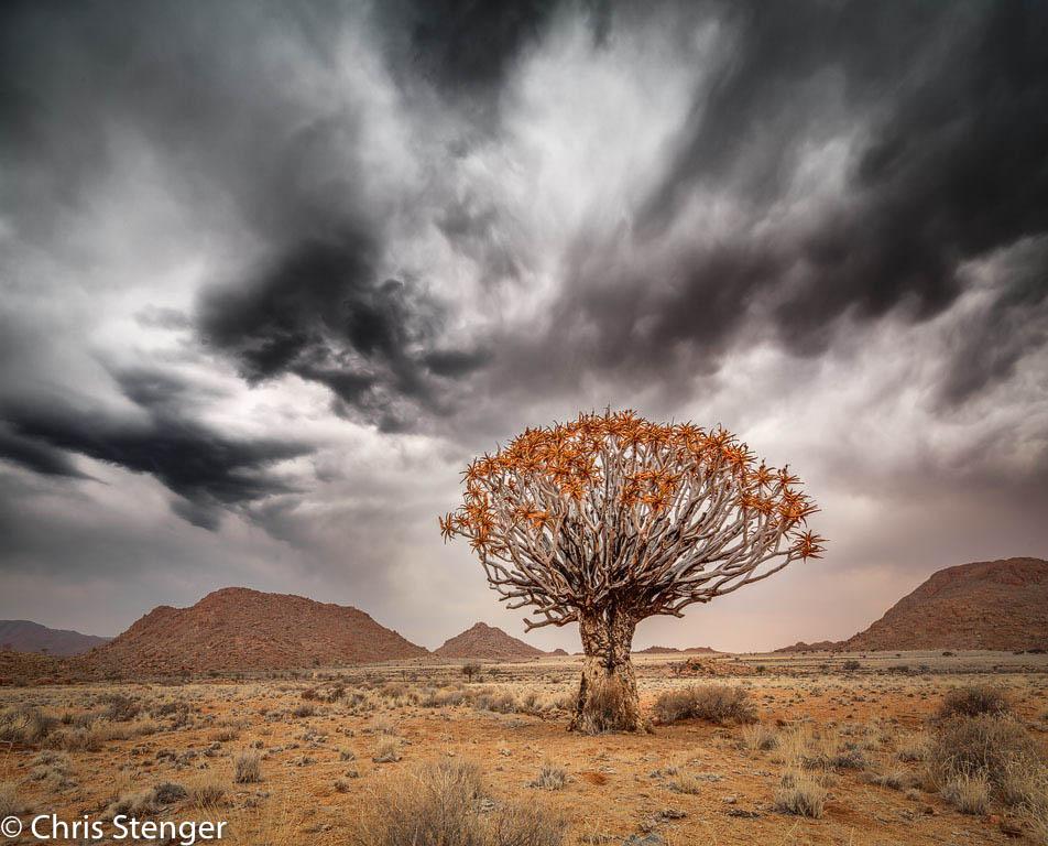 """Kokerboom, Namibië. Hier wilde ik de kokerboom prominent in de voorgrond hebben terwijl de wolkenlucht goed weids uit moest komen; voor mij een standaardsituatie waarvoor het 17 mm TS objectief uitermate geschikt is. """"Verticaal"""" panorama van 2 gestitchte liggende opnames gemaakt met de shift functie vanaf statief."""