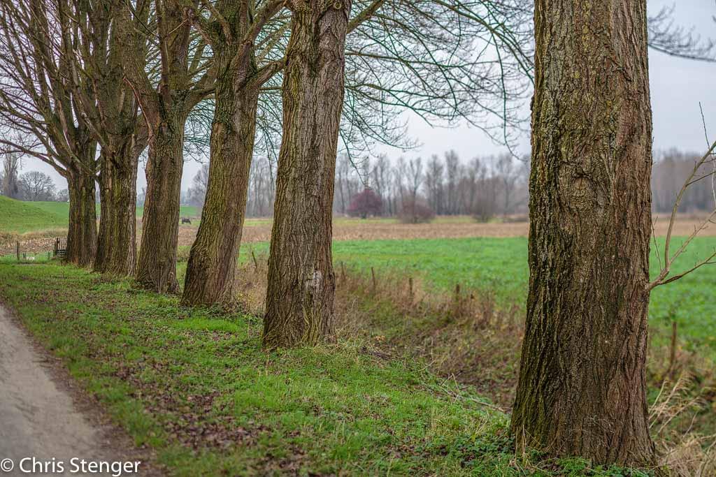 Uiterwaard bij Huissen. Door gebruik te maken van de tilt functie kon de bomenrij, zelfs bij een grote diafragma opening, van voor tot achter scherp worden weergegeven. Het scherptevlak is de bomenrij en dus dient de lens in de richting van dit vlak te worden gekanteld. De loodrechte afstand tot het scherptevlak, in dit geval de bomenrij, bepaalt de kantelhoek terwijl in dit geval de hoogte tot de grond geen rol speelt. De afstand tot de bomenrij bedroeg ca 300cm waarbij een kantelhoek van 1,5 graad hoort. De bomenrij is scherp, maar alles voor en achter de bomenrij is onscherp bij het gekozen grote diafragma.