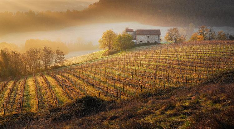 Zonsopkomst boven wijngaarden in Toscane