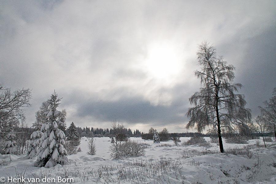 Winterlandschap in de Hoge Venen.