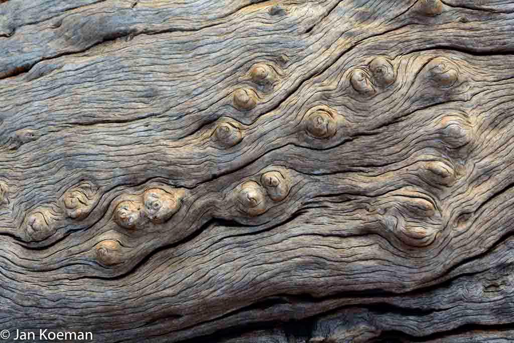 Houtstructuur dode boomstam