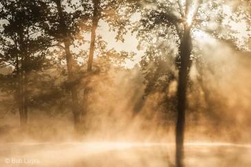 Boven een ven ontstaat gemakkelijk mist.