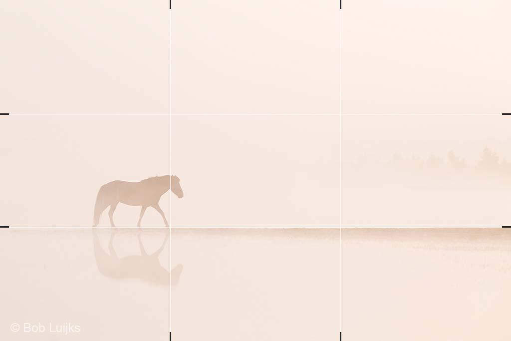 Paard gepositioneerd volgens de regels van derden.