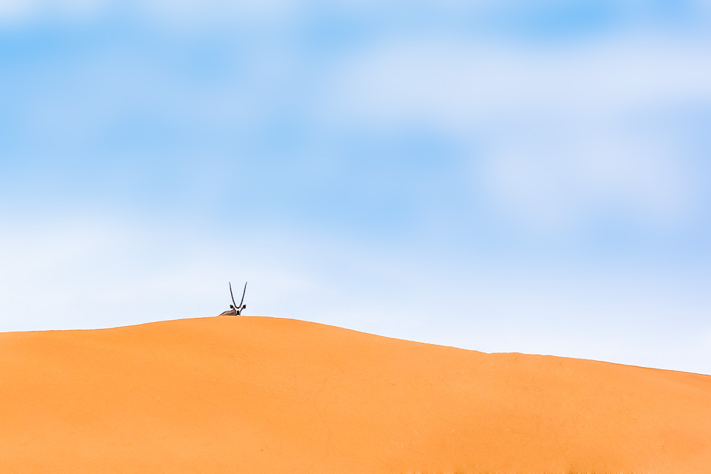 Oryx spiesbok Sossusvlei Namibia