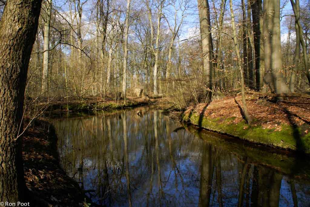 Het rivierbos in Amelisweerd is doorsneden met kreken, aftakkingen van de Kromme Rijn.