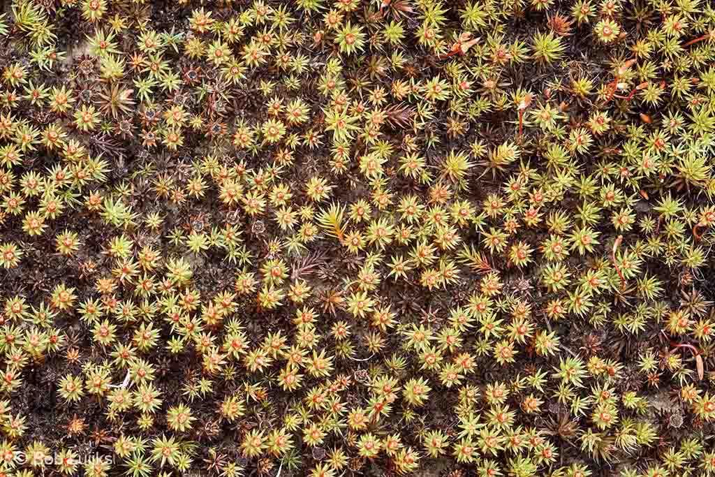 Grafisch patroon van mossen.