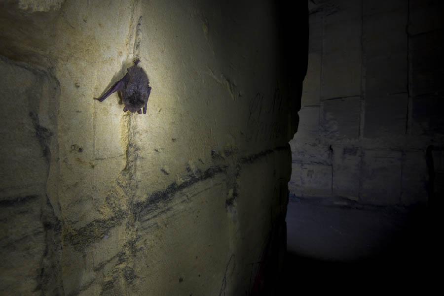 Jarno van Bussel Vleermuis in de kelder