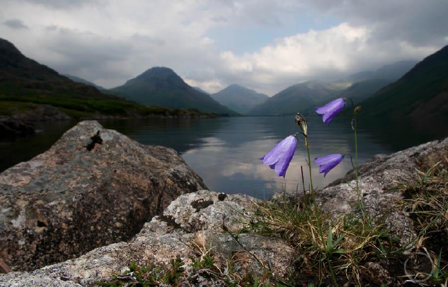 Jodie Randall Drie blauwe bloemetje