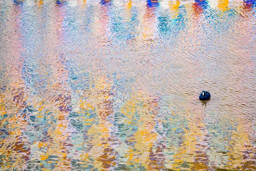 Meerkoet in het water voor het Groninger museum.