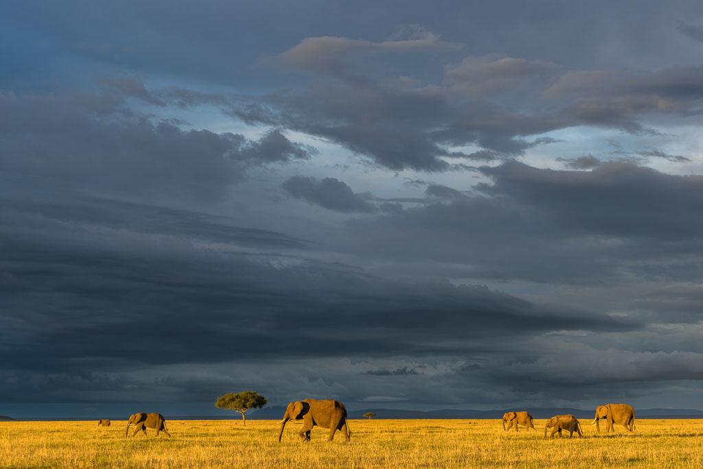 70-200mm. Alweer zo'n fantastische zonsondergang op de savanne. Het laatste licht laat het savannegras mooi geel oplichten terwijl er donkere wolken zich boven het landschap samenpakken.