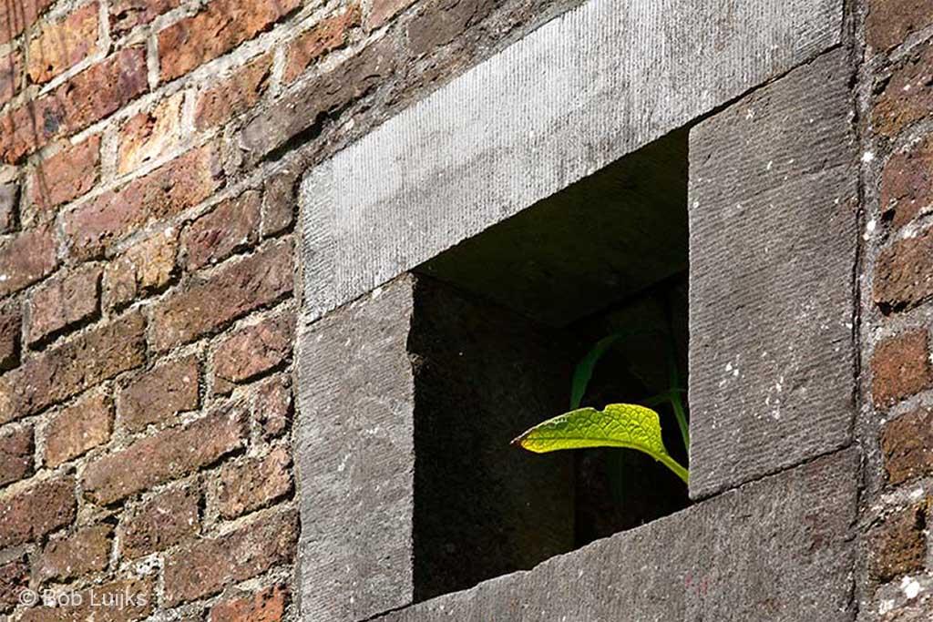 Plant kijkt uit het venster.