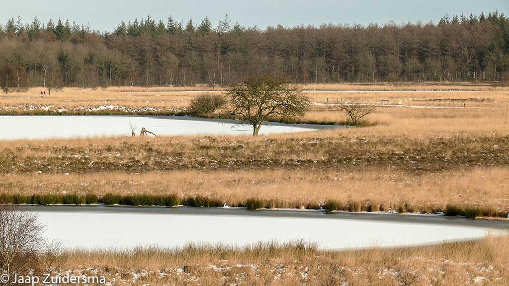 Gebieden fotograferen Natuurfotografie.nl:Duurswouderheide