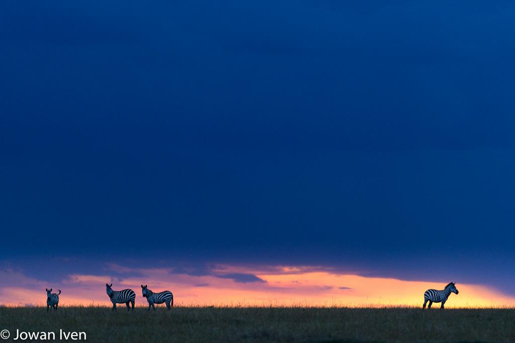 Zebra sunset. Tijdens de middagdrives gingen de iso's rap omhoog