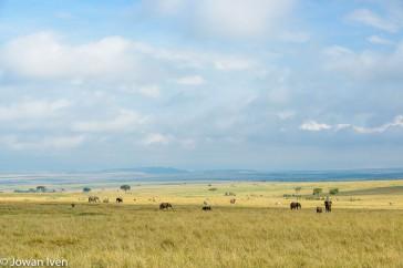De savanne zoals ik me die voorstelde.