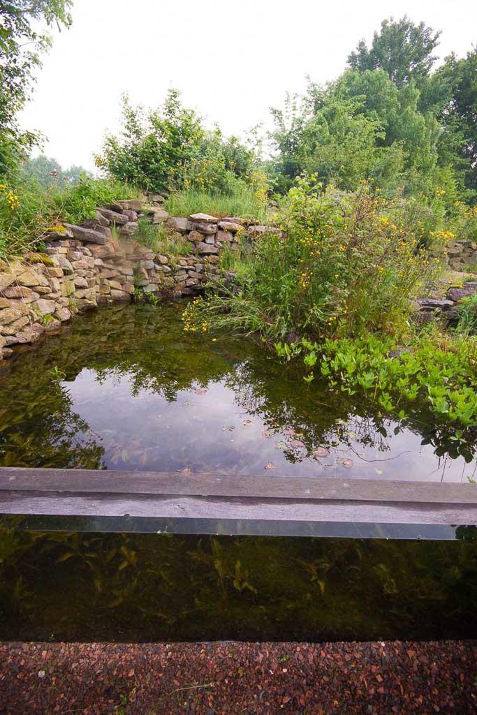 Vijver met glazen wand en zitkuil. Door het glas kun je watersalamanders en andere waterdieren in hun natuurlijke omgeving fotograferen.