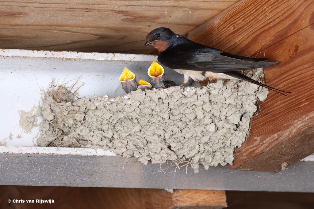 (g)een verbod op nestfotografie?