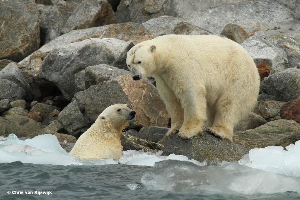 - Dus ik zeg tegen die fotograaf, weet jij waarom wij geen pinguïns eten? - Zit jij nou alweer in het water te schijten?