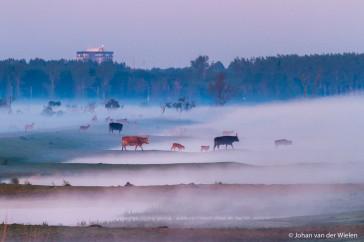 Kenmerkend voor de Oostvaardersplassen: grote kuddes grote grazers, restanten van aanleg landbouwgebied en de eerste bebouwing van Almere.