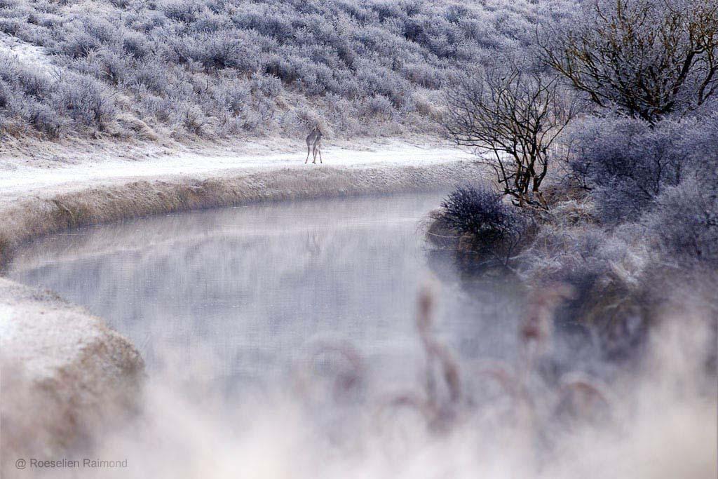 Mistig kanaaltje in de AWD op een koude, vroege ochtend