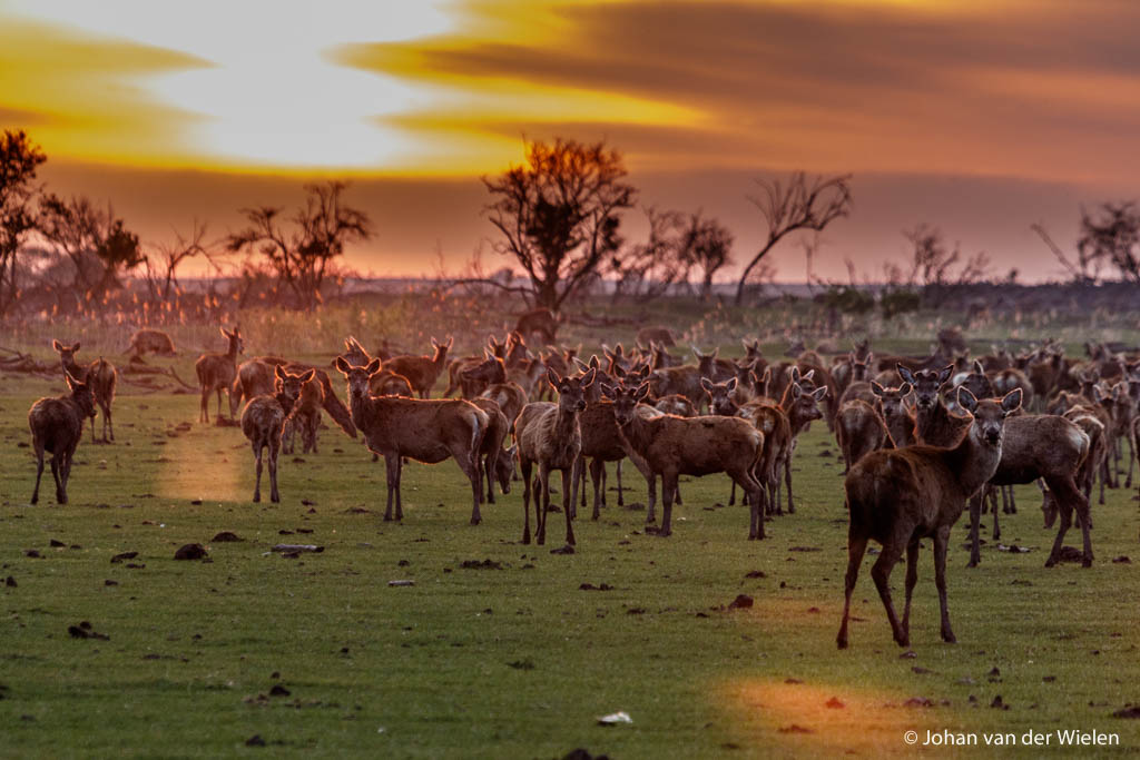 15 mei 2015, sunset in the Serengeti of the North. Licht en dier komen perfect samen en - geluk! - ze kijken allen prachtig op