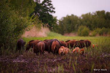 In deze levensbeschouwing zijn varkens gewoon halal.
