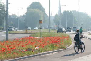 Jonge fietser kijkt verwonderd naar de vele klaprozen in de berm.  - Fotograaf: Ron Poot