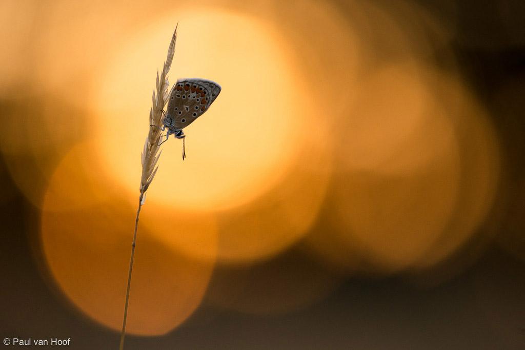Vlinder, Frankrijk