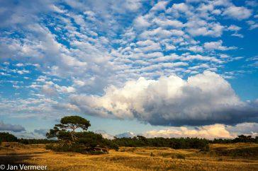Fotografie staat al jarenlang enorm in de belangstelling en de natuur is voor velen het belangrijkste onderwerp voor de lens. Daarom vindt de Veluwse Foto dag midden in de natuur plaats!