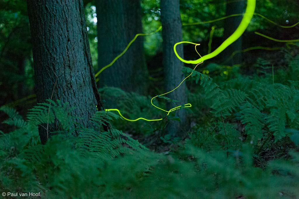 Lichtspoor gevangen in een enkelvoudige belichting van 20 seconden. Nikon D700, 70-200mm @70mm, f/2.8, 20 sec., iso 6400.