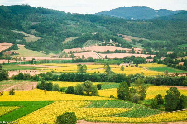 Landschap in Umbrië met velden vol zonnebloemen.