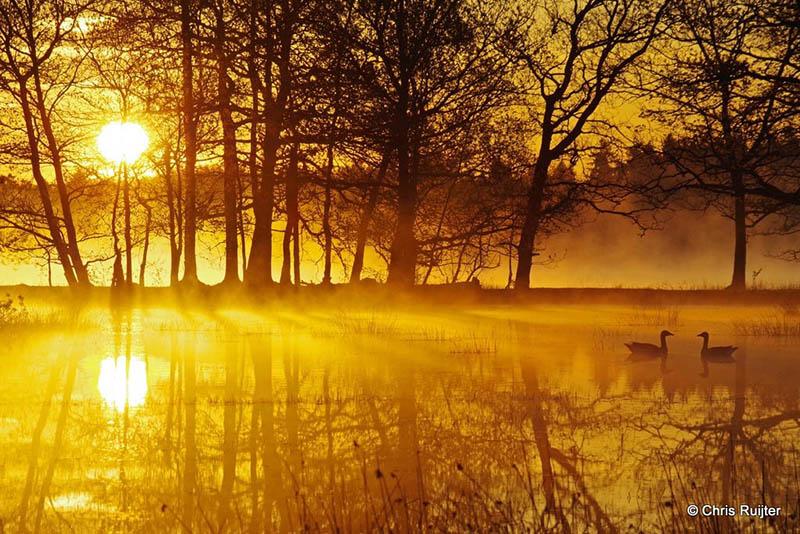 Gouden morgenstond