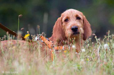 Hond op ooghoogte in zijn eigen leefwereld.