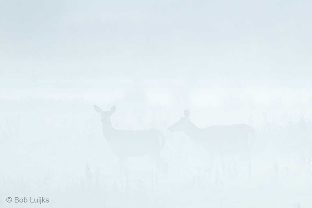 Dichte mist, sfeervol, maar ook uitdagend.
