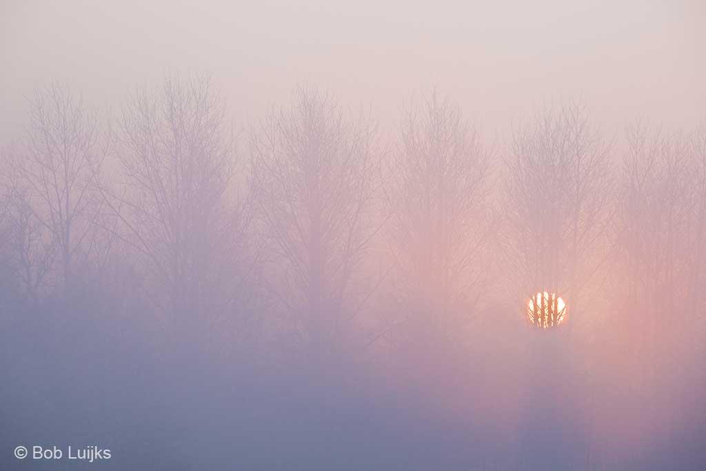 Paarse mist