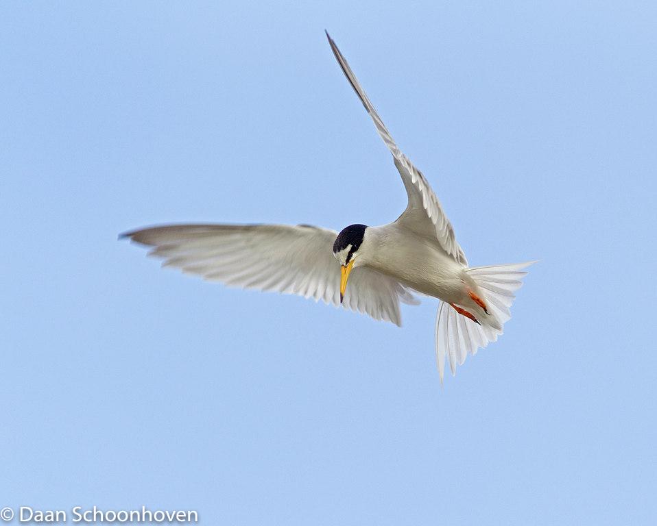 vogelfotografie