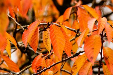 herfstkleuren fotowedstrijd