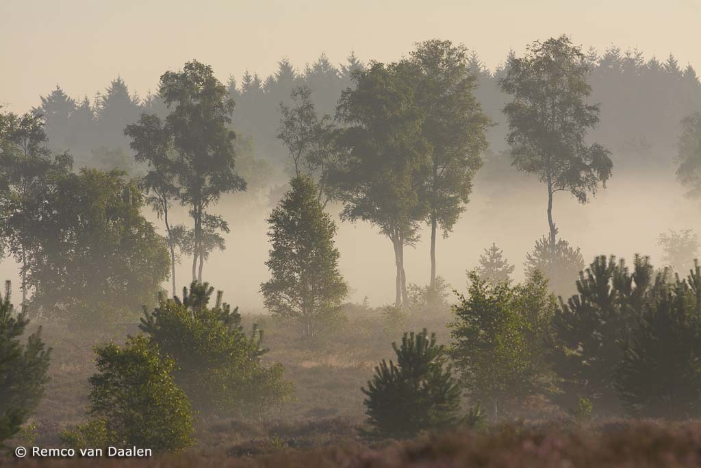 Sallandse heuvelrug ind e mist
