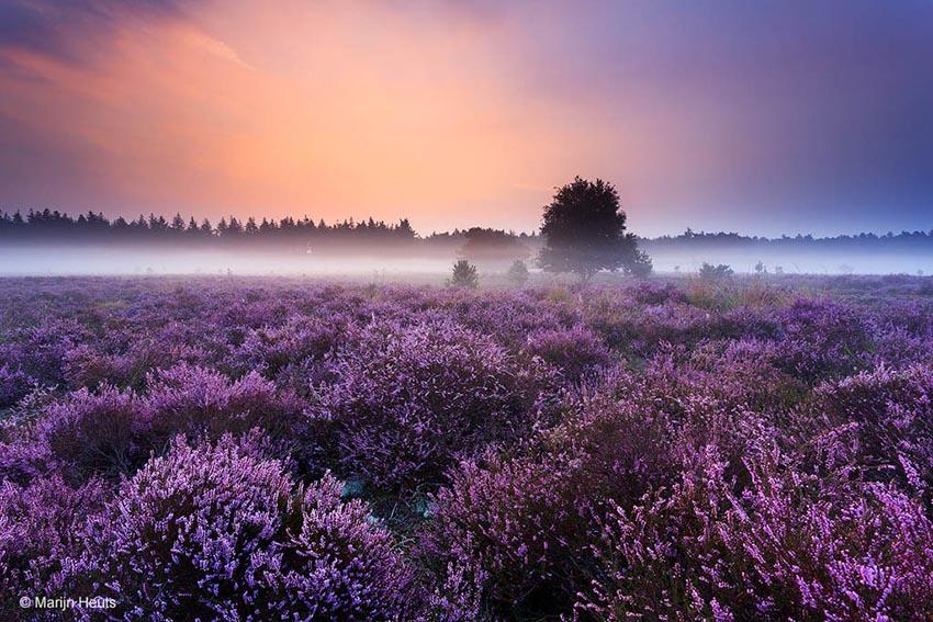 hei mist paars zonsopkomst